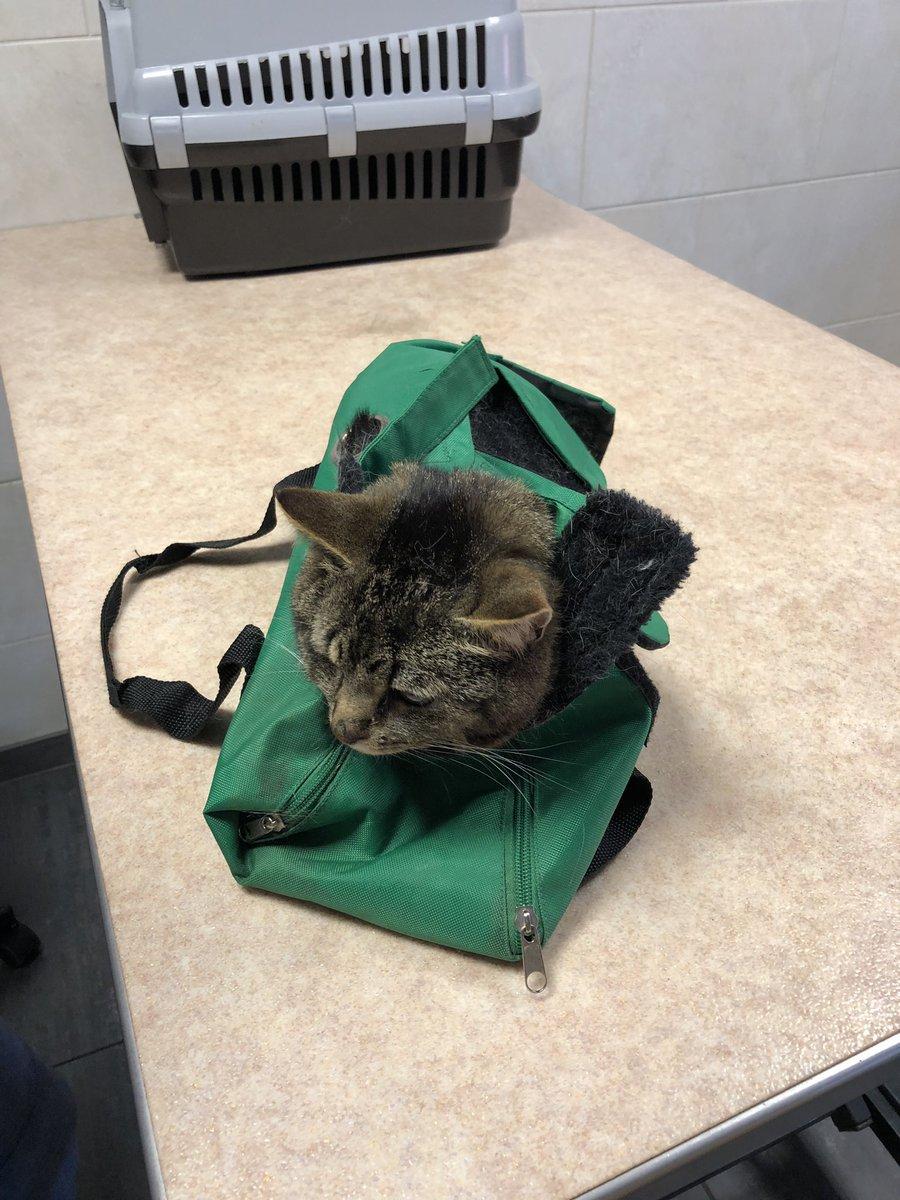 Cat Straight Jacket