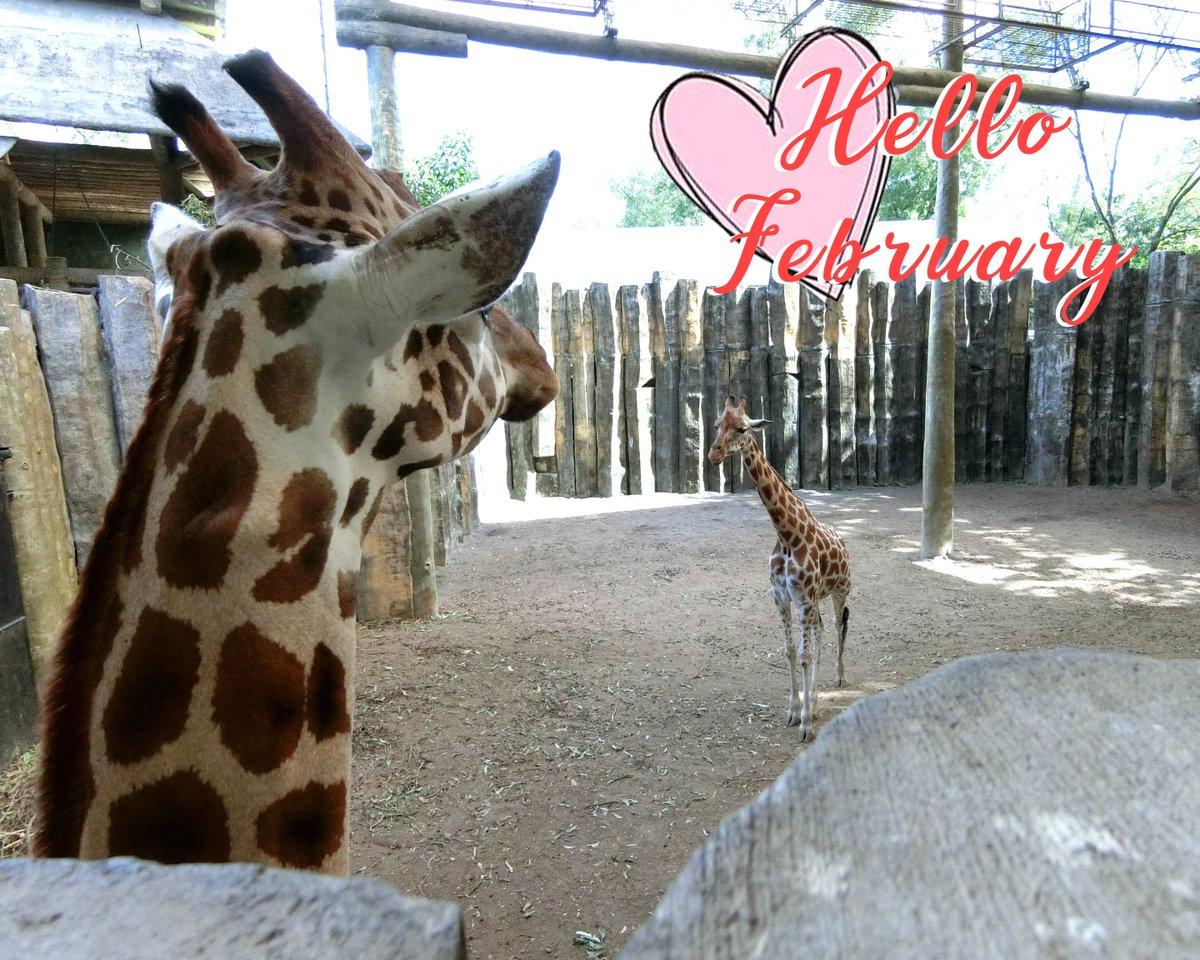 Avilon Zoo on Twitter:
