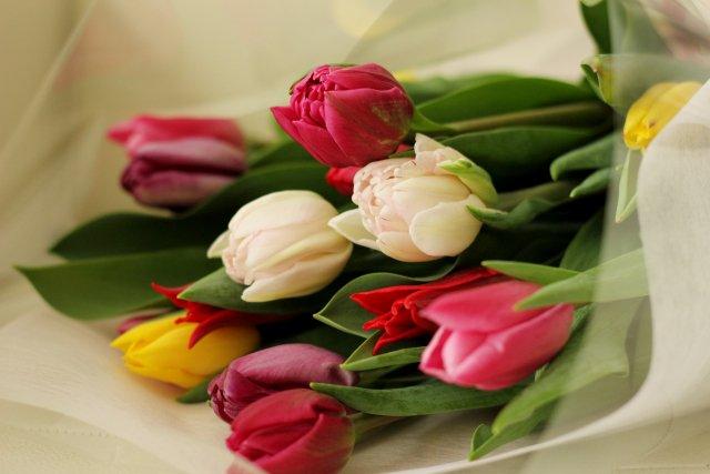 【チューリップの花言葉】  『思いやり』『名声』『愛の告白』  3人の騎士から王冠・剣・黄金を贈られ求愛された少女。  困った少女は女神に頼み、チューリップに姿を変えました。 王冠は花、剣は葉、黄金は球根になったとか。 https://t.co/aWScQhgUwE