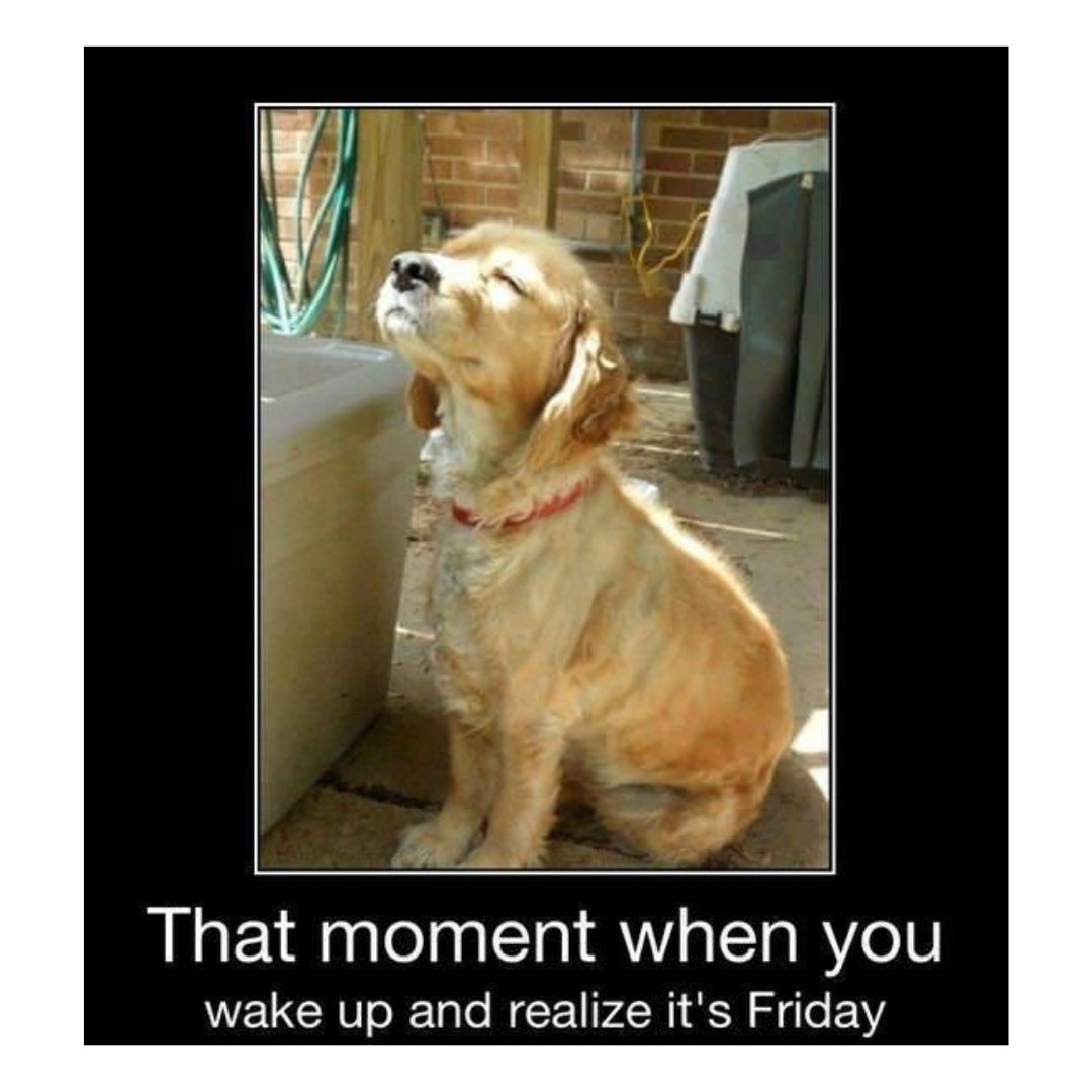 Bentwood Apartments On Twitter Woof It S Friday Let Spawty