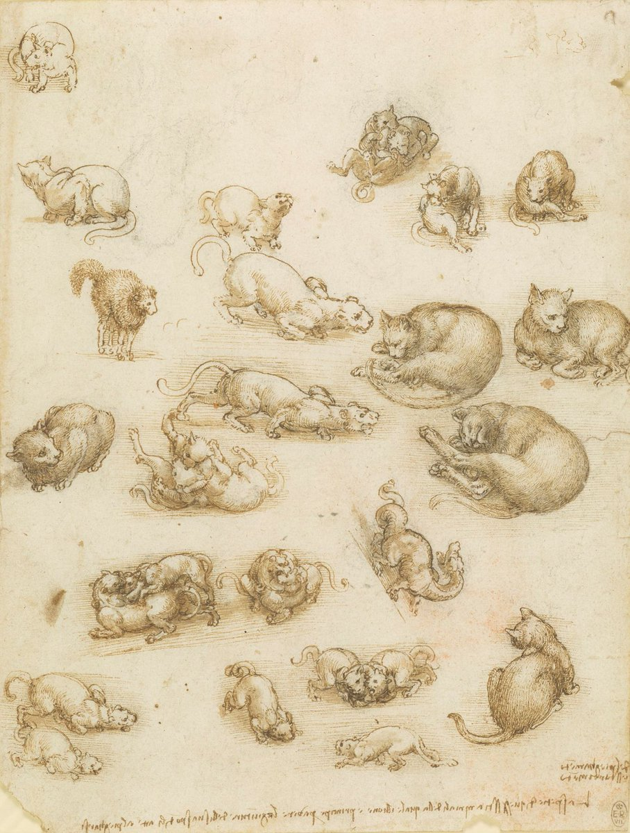 This sheet is filled with #LeonardoDaVinci sketches of cats & lions asleep, sitting, prowling, playing & fighting. Tucked in between them is a dragon with its long neck curled over its shoulder. #Leonardo500 https://bit.ly/2sWKhXq
