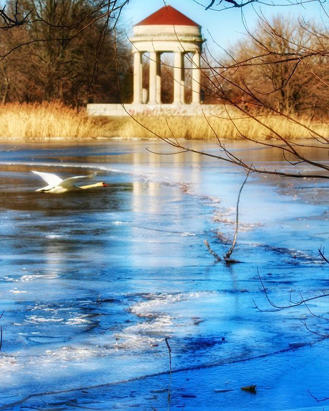 A swan does a flyby over the icy lake at FDR Park in South Philadelphia. 🌬💨 #nature #ice #frozen #swan #fdrpark #birds #naturephotography #philadelphia #philly #phillygram #phillymasters #phillyunknown #phillyprimeshots #igers_philly #howphillyseesph… http://bit.ly/2GgrYo3