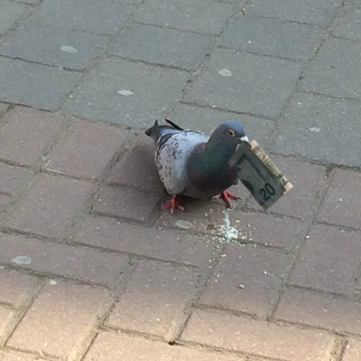 RT if this pigeon has more money than you