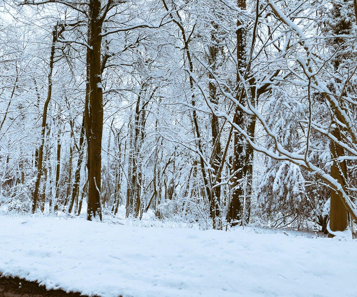 RT @suzielew44: #snowday #enchantedforest https://t.co/Da9Xno7WEK