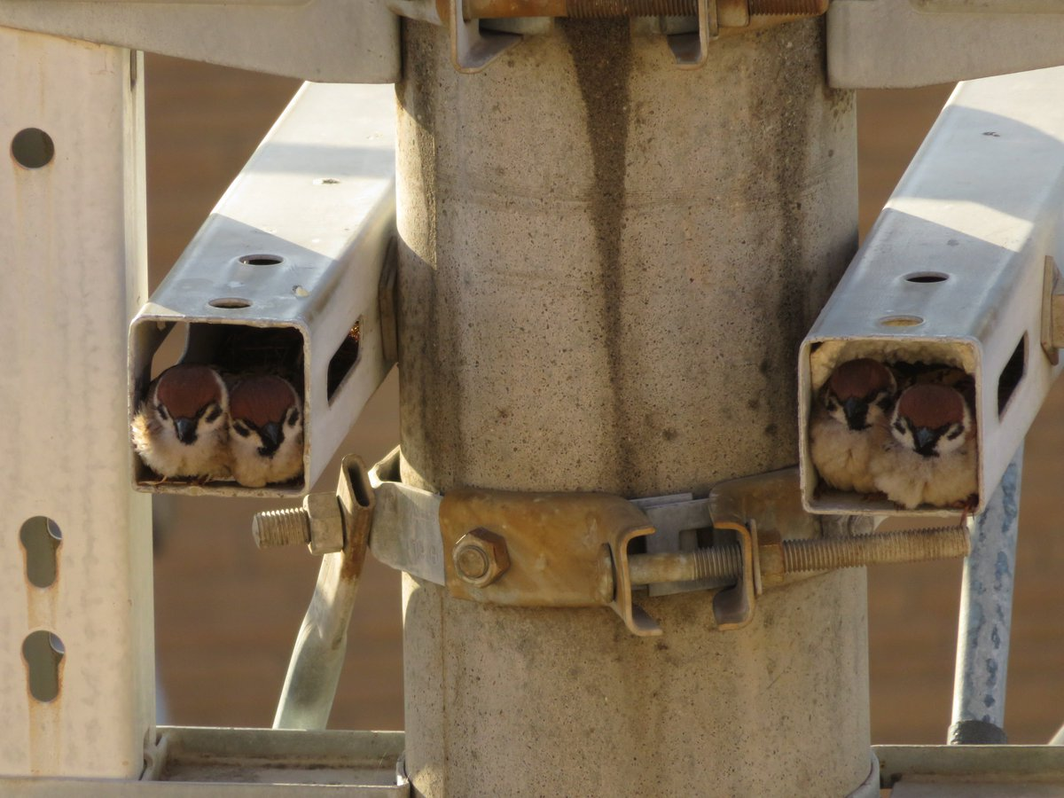 【悲報】害獣スズメ、監視カメラを使用不能にする