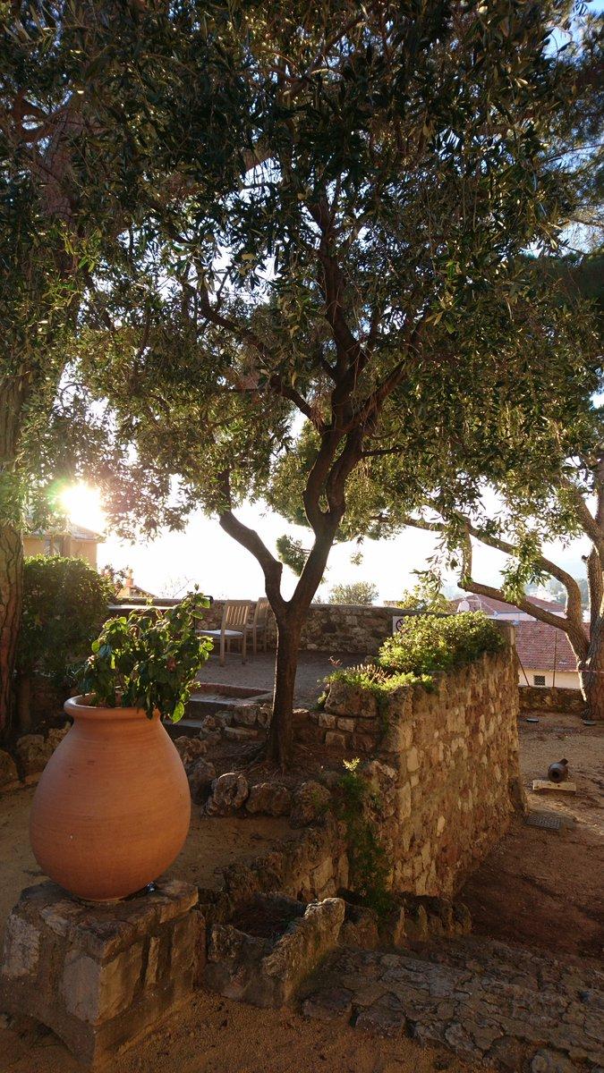Lumière de fin d'après-midi ☀️#MuseeDeLaCastre #Cannes #BeautifulCity #NoFilter #InLoveWithCannes #CotedAzurFrance #CotedAzur #FrenchRiviera @villecannes @davidlisnard @VillageduSuquet @CannesIsYours @VisitCotedazur