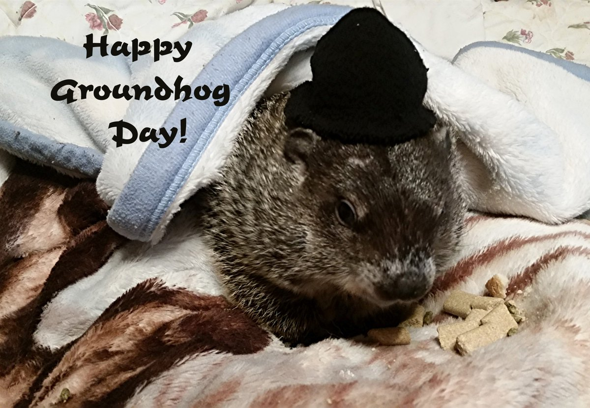 @JaniceHuff4ny  Although every day is Groundhog Day in our house, Moses wants to wish you and your viewers all the best as you celebrate HIM (and maybe that fellow named Phil...)