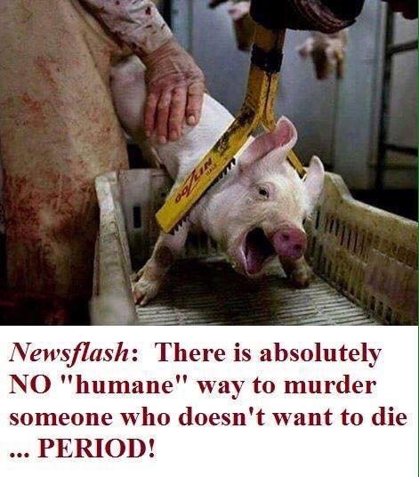 There is no humane way to murder someone who doesn't want to die! #GoVegan #AnimalRight <br>http://pic.twitter.com/perMoEMAuR