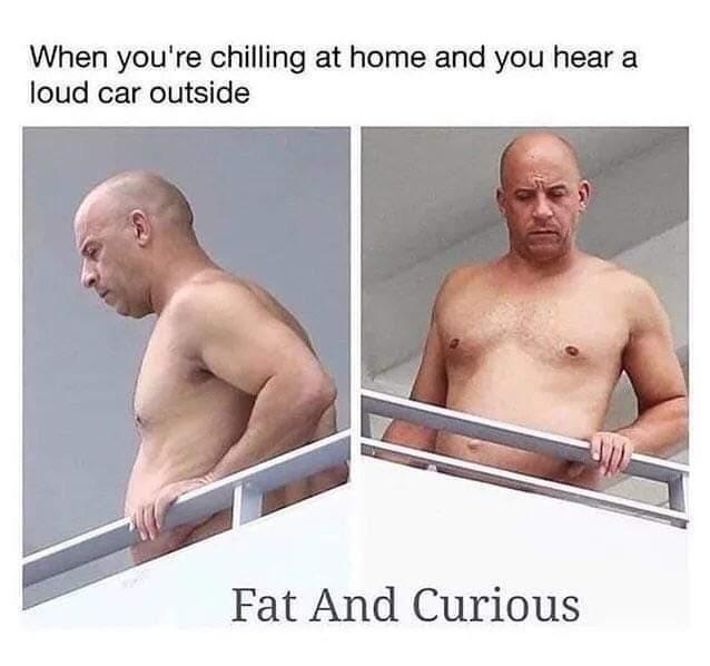Fat & curious