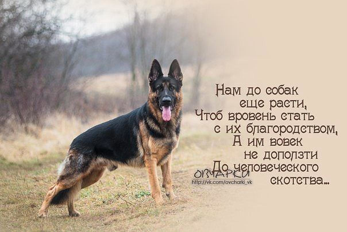 картинки про собак с фразами структуры