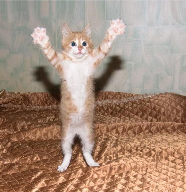 Смешные картинки про кошек до слез новые