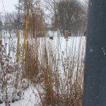 Image for the Tweet beginning: Prairie gardens look good in