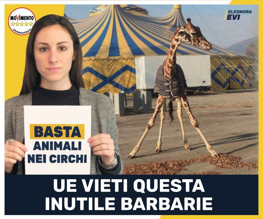 depositata interrogazione alla CommissioneEU per chiedere il divieto dell'uso di animali nei circhi: Dopo il caso di Brescia, voglimo un divieto a livello Europeo! Basta ai finanziamenti europei, diretti o indiretti ai Circhi #BastaAnimalineiCirchi #CircoSenzaAnimali