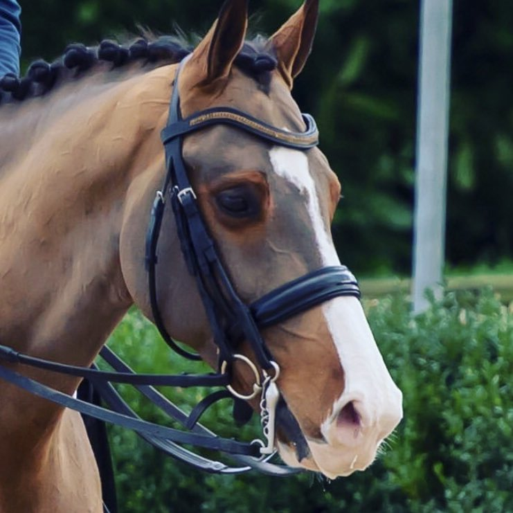 HorseScoutTeam photo