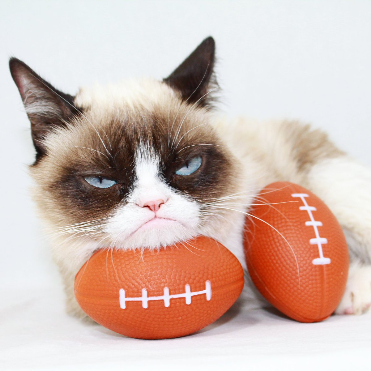 Image of: Book Grumpy Catverified Account realgrumpycat Walmart Grumpy Cat realgrumpycat Twitter