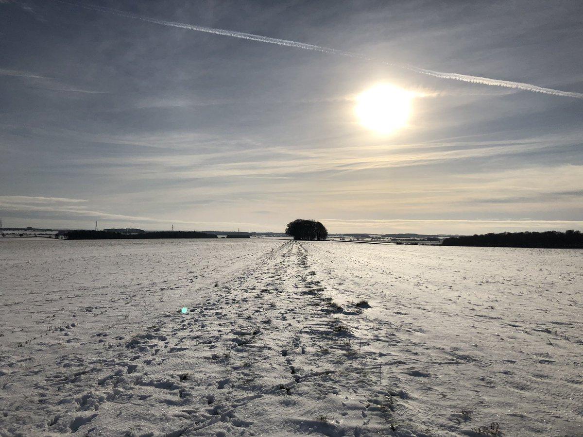 RT @Dexterchi: Long long walk in the snow. #WinterWonderland #Cotswolds #chihuahuastyle 🐾🐾🐾 https://t.co/eEJAd4zeEh