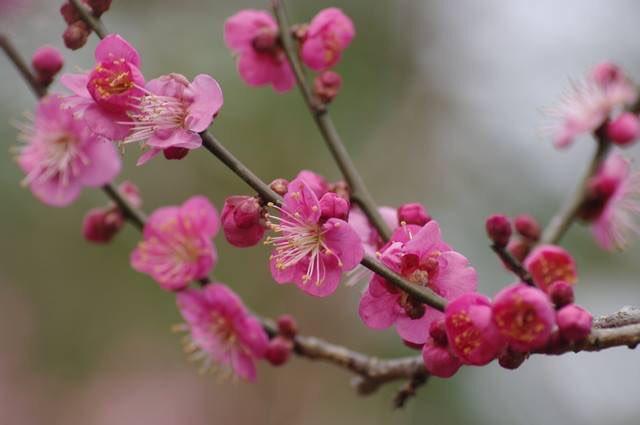 本日2月4日は立春、二十四節気のひとつです。 冬と春を分ける節目「節分」の翌日、暦の上では春が始まりました。立春の初候(七十二候:2019年は2月4日~2月8日)は「東風解凍」。東風が厚い氷を解かし始めるころという意味です。 季節を感じる遊び   #晴明神社 #暦 #立春