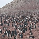 ペンギンいるといいなと思っていたら!南極ってすごい!