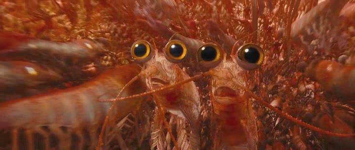 естественному освещению креветка фото смешные движение