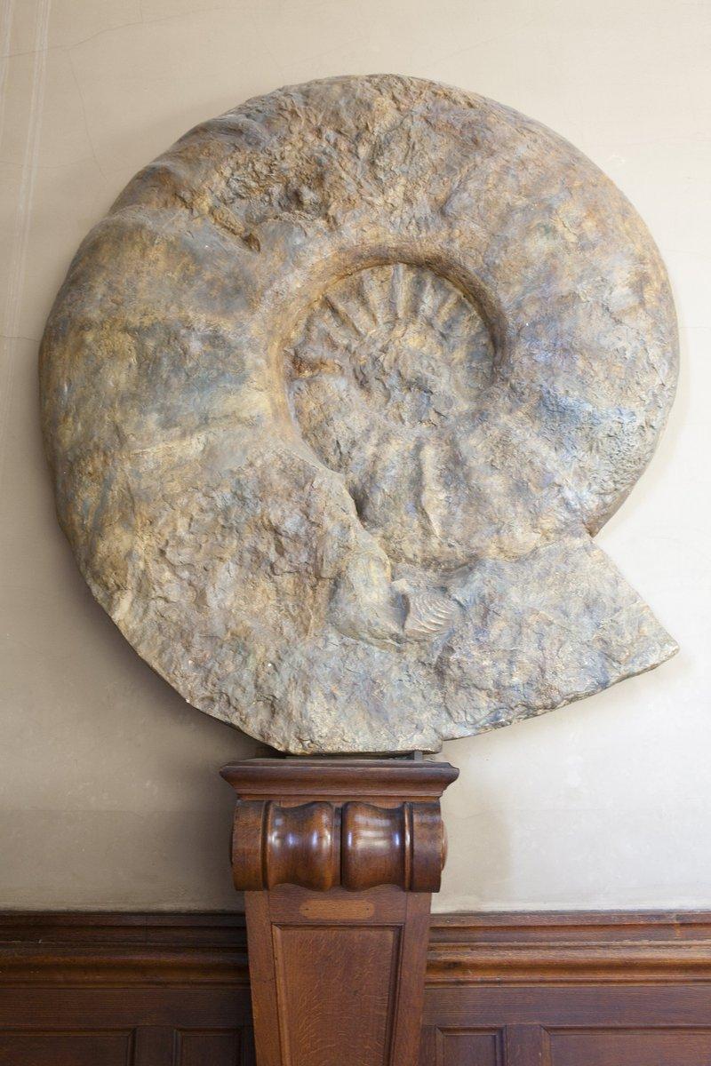 À la Galerie de Paléontologie et d'Anatomie comparée, vous pourrez admirer un moulage de la plus grande ammonite connue au monde : elle mesure plus de 2 mètres de diamètre et date d'environ 72 millions d'années ! http://www.jardindesplantesdeparis.fr/fr/programme/galeries-jardins-zoo-bibliotheques/galerie-paleontologie-danatomie-comparee-2770…
