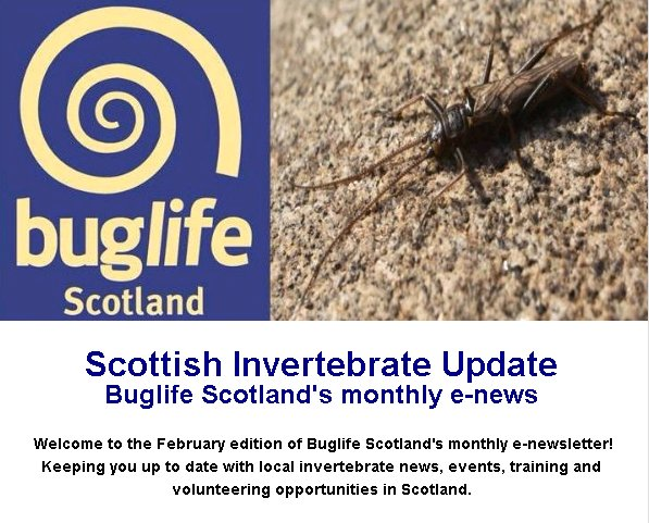 BuglifeScotland on Twitter: