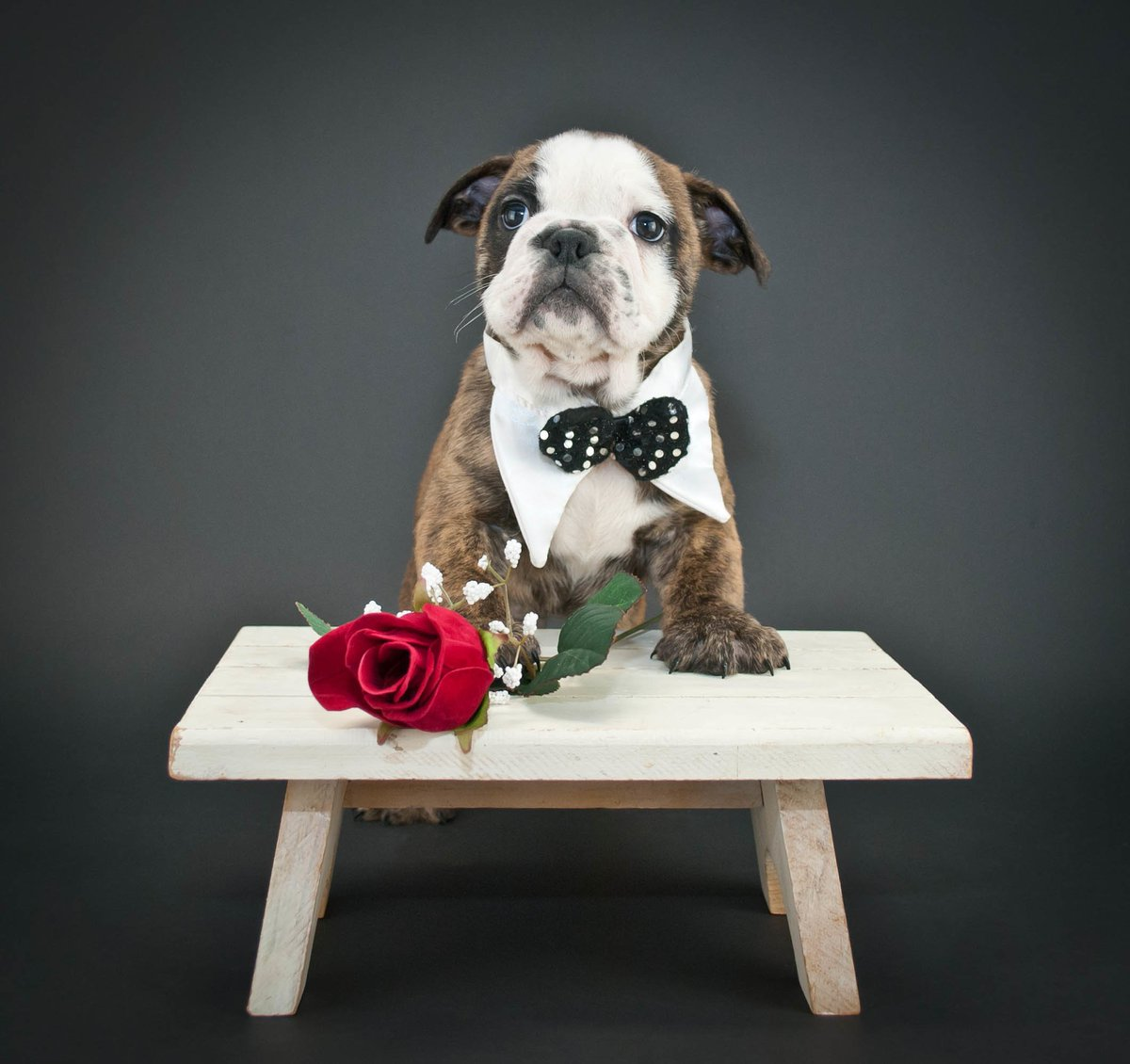FACES MAGAZINE'S $6,000 VALENTINE'S DAY CONTEST Presented by the 7th Annual Casino Royale on June 14th  Like and retweet for your chance to win 🌹🎁  @BrookstreetOtt @holtzspa @northandnavy @ottawaflowers @RoostersMens @ExperienceFood1 @MountPakenham
