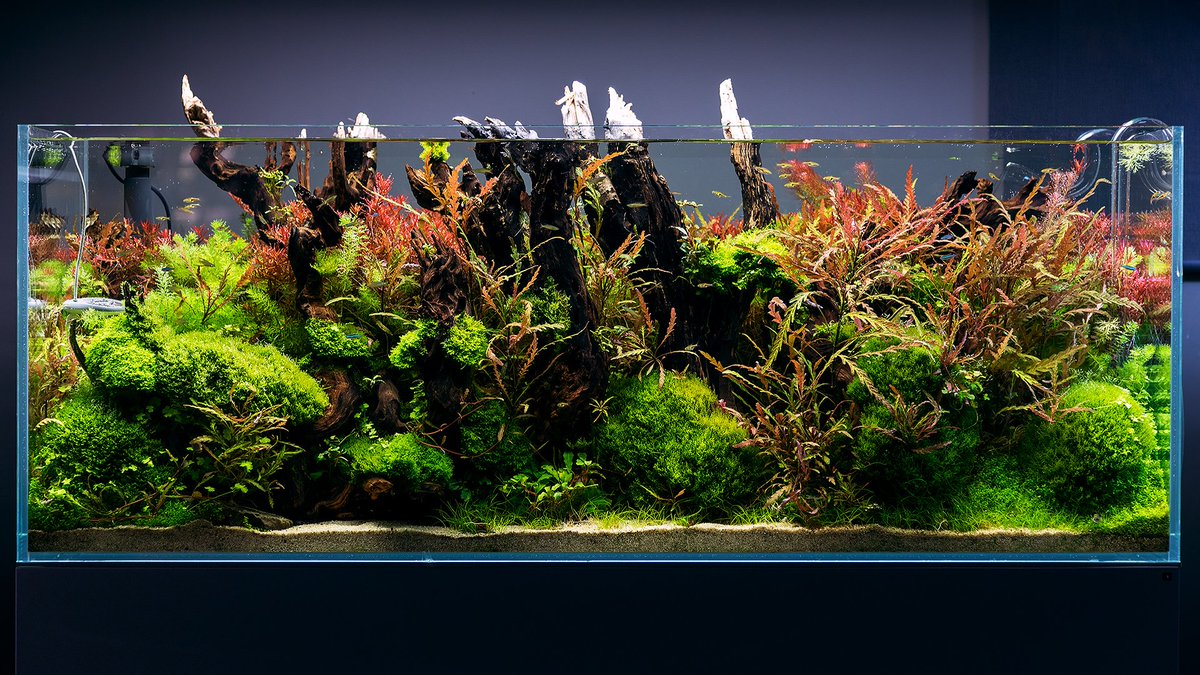 Green Aqua On Twitter We Ve Built This Aquascape At Green Aqua To Be A Detailed Forest Style Planted Tank Back In 2018 May This Is How It Looks Today 8 Months After