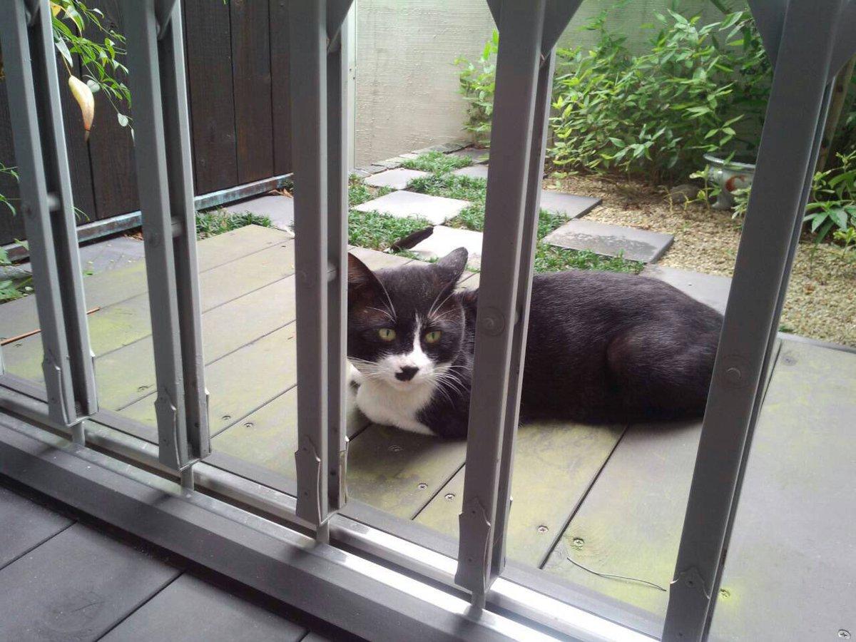 うちのデッキにちょくちょく遊びに来ていたシロクロ猫…勝手にクロちゃんと命名。 ある日、ノミ取り首輪を付けていたので、『やはり飼い猫だったのかぁ』と思い、その首輪に小さな手紙を結びつけました。。。すると翌日、返信が首輪についていました!