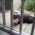 家によく遊びにくるネコの首輪に手紙を結びつけてみたら、返事来た!