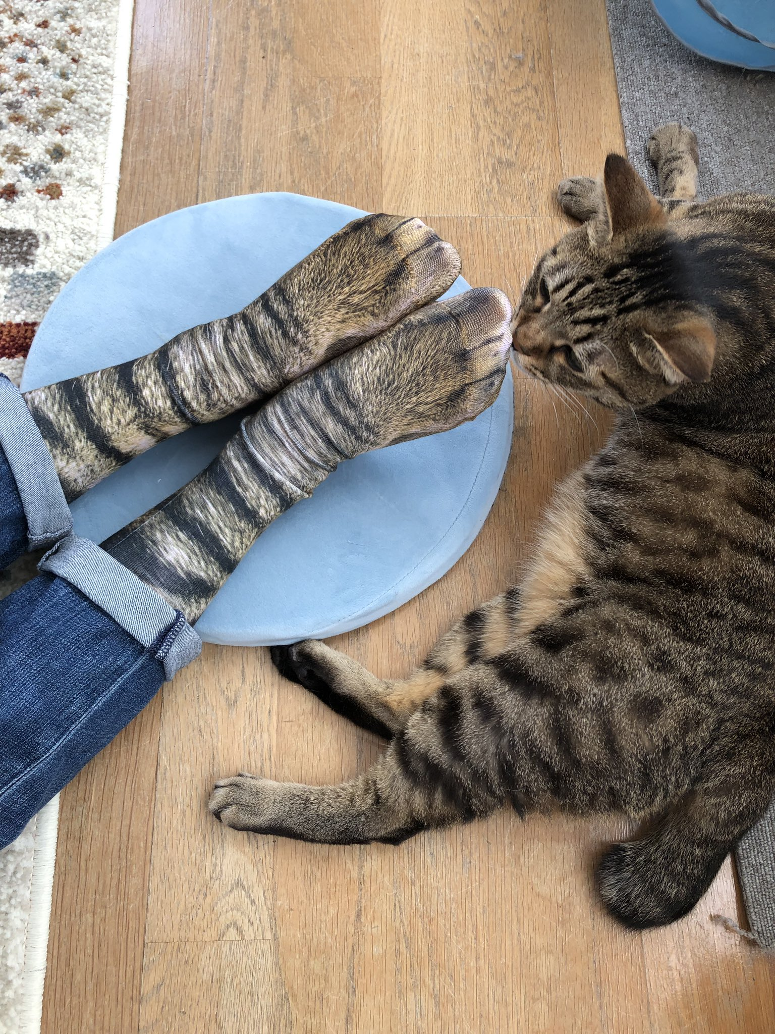 猫の靴下が想像以上に猫だった
