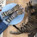 猫の靴下が想像以上に猫だった!