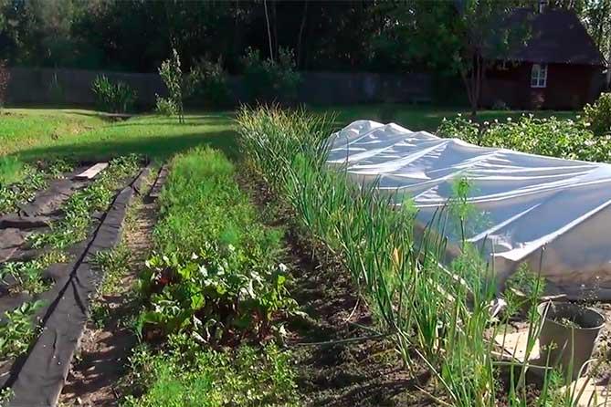 садовые и дачные товарищества новый закон