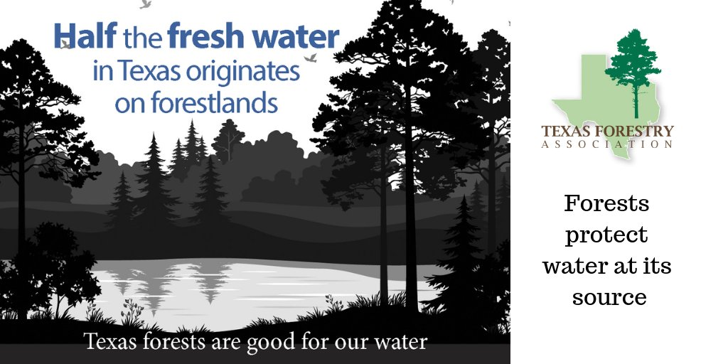 The working forests in Texas are good for our water! #workingforests #workingforestsmakelifebetter #forestproud