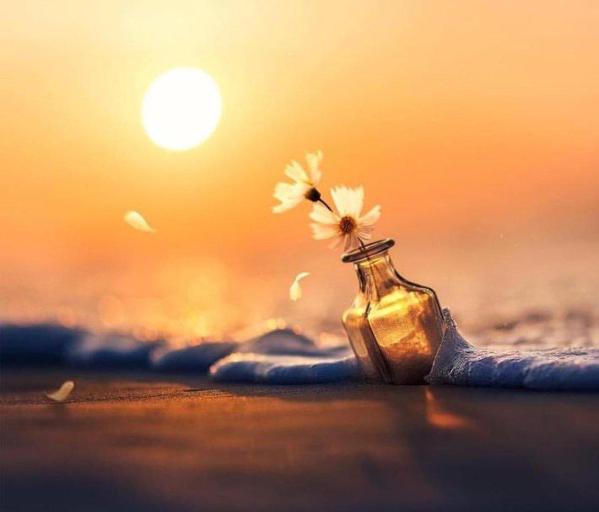 الأمل ليس حلما بل طريقا ... ليجعل الحلم حقيقة ....🦋📸🎞📽💌🌸