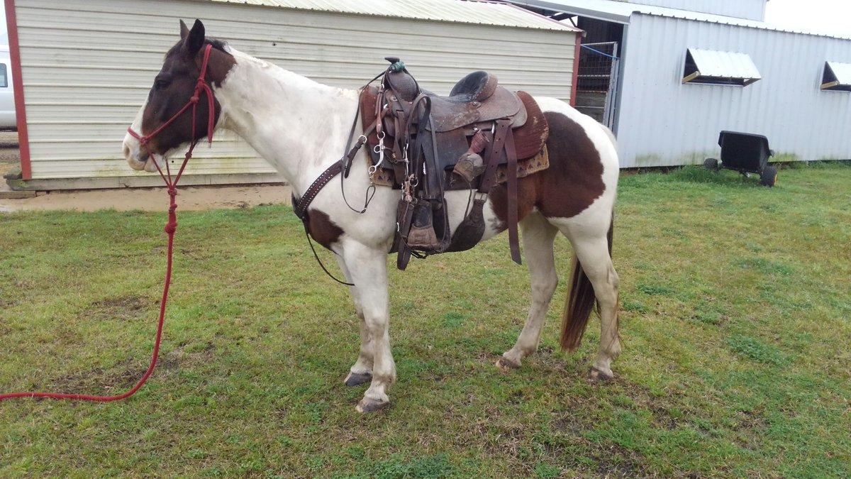 Wyatt Pratt Performance Horses (@pratt_horess) | Twitter
