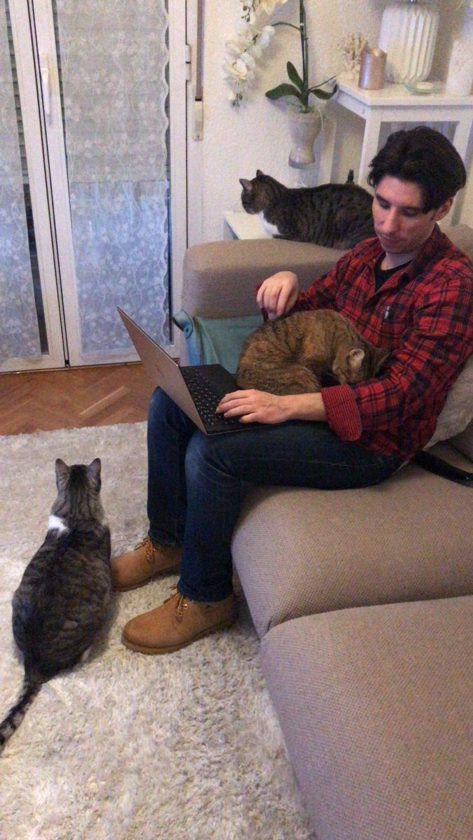 Our cats love @LucasHLTV 😂