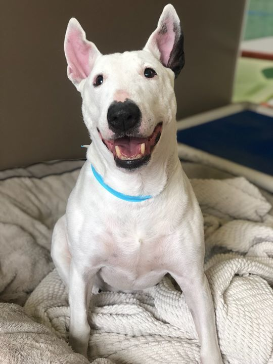 If a picture is worth a thousand words, Noel's impawssibly cute smile says it all! https://t.co/Vjxqw8hBc6