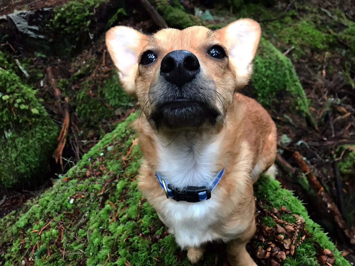 You sure you didn't bring any treats? #tailsoftucker  #explorebc #optoutside #tunnelbluffs #dogsofvancouver #chiweeniepoo #nsbuzz #vancitydogs #hikingwithdogs #nc_cuties #natgeoadventure #boopthesnoot #yvrdogs #northvandogs #dailyhivevan #potd #squamishbcpic.twitter.com/TSSbwPV00o – at Tunnel Bluffs