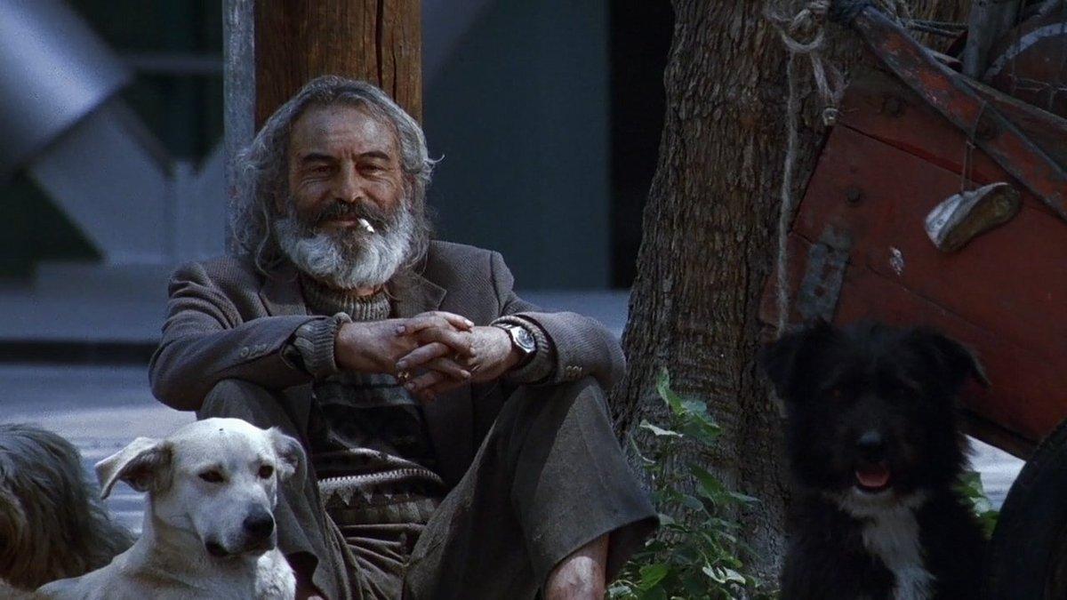 """Resultado de imagen para amores perros"""""""
