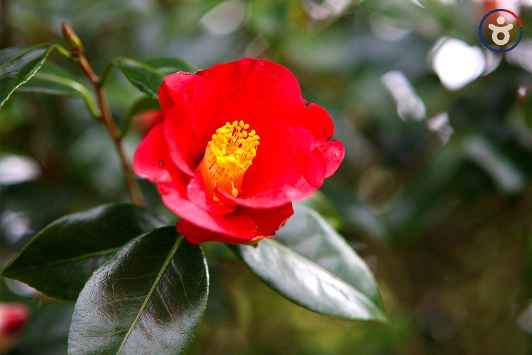 빨간 동백꽃🌺 #저장각  동백꽃 예쁘게 피는 여수, 따뜻해지면 여행가요❤️  #여수 #동백꽃 #국내여행 #여행이있는금요일