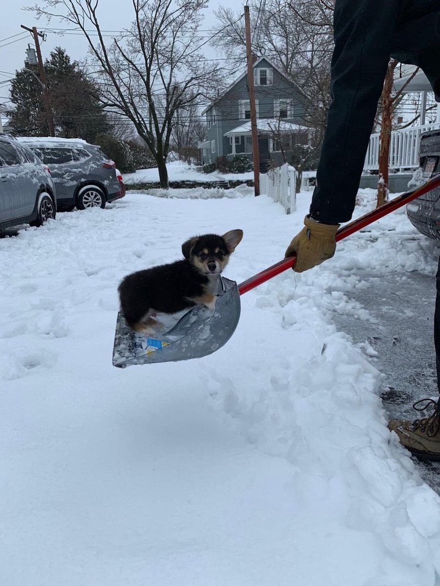 This Is Marty He Heard You Needed Some Help Shoveling The Driveway 14 10 Thank So Much Martypictwitter ThLIobU2mX