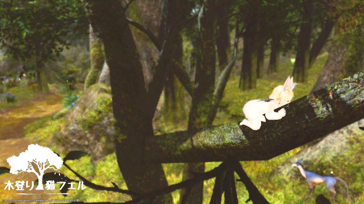 まったりにゃ〜ฅ*´ω`*ฅ #木登り猫フェル #ララフェル