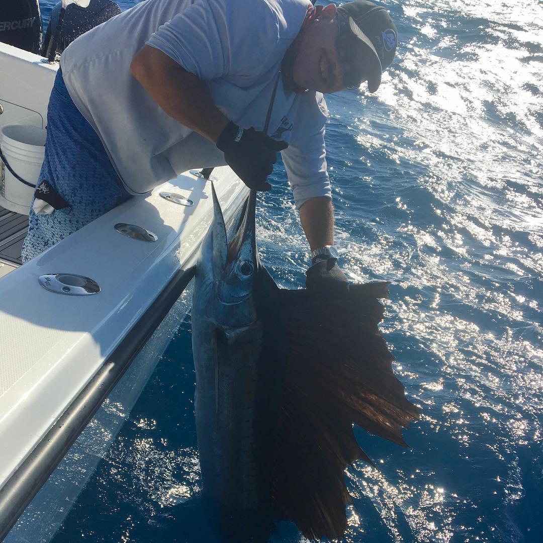 Miami, FL - Double D released 4 Sailfish.