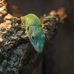 Image for the Tweet beginning: The Tree Monitor is coming