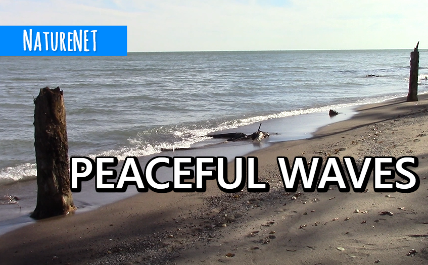 Gentle Beach Waves | Relaxing Nature Sounds https://buff.ly/2NdYwjT  #nature #sleep #relax #chill #waves #meditate #study #nap