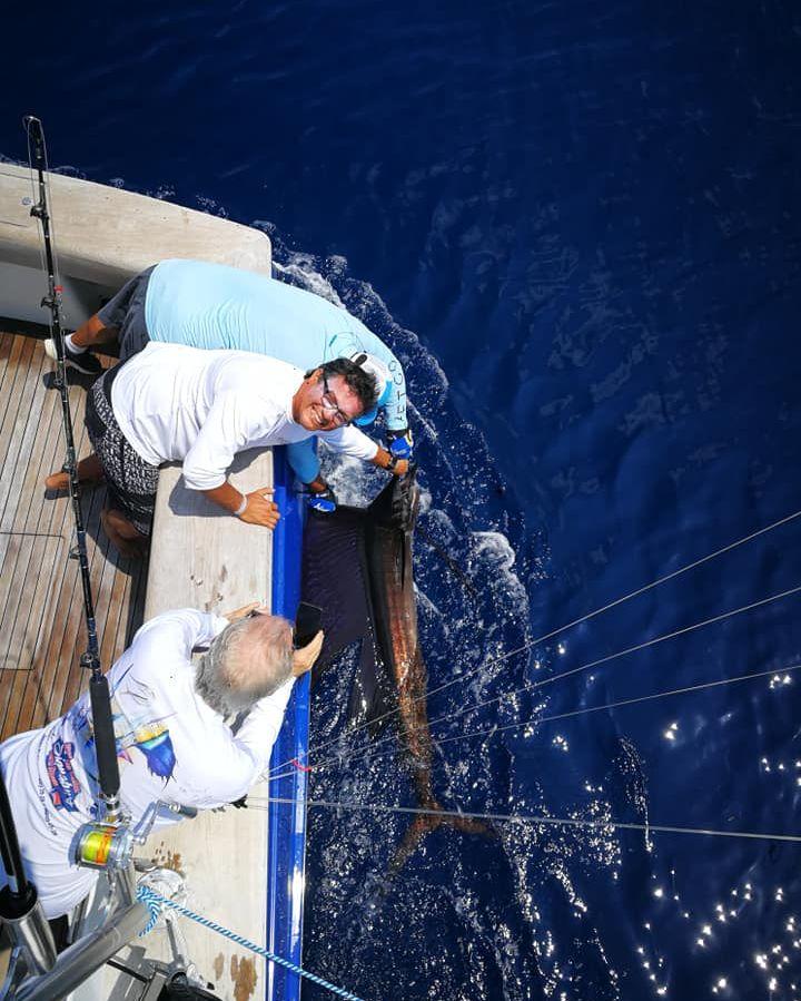 Los Suenos, CR - Open Fly released 7 Sailfish.