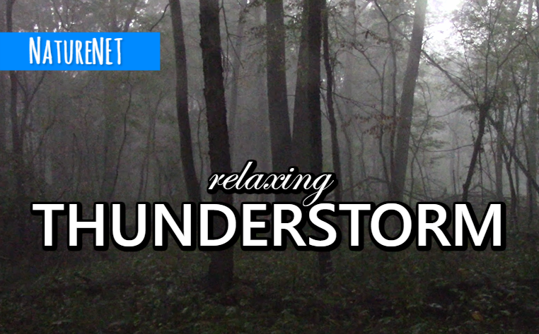 Forest Thunderstorm | Relaxing Nature Sounds https://buff.ly/2NfFABp  #nature #sleep #relax #chill #thunderstorm #meditate #nap #study