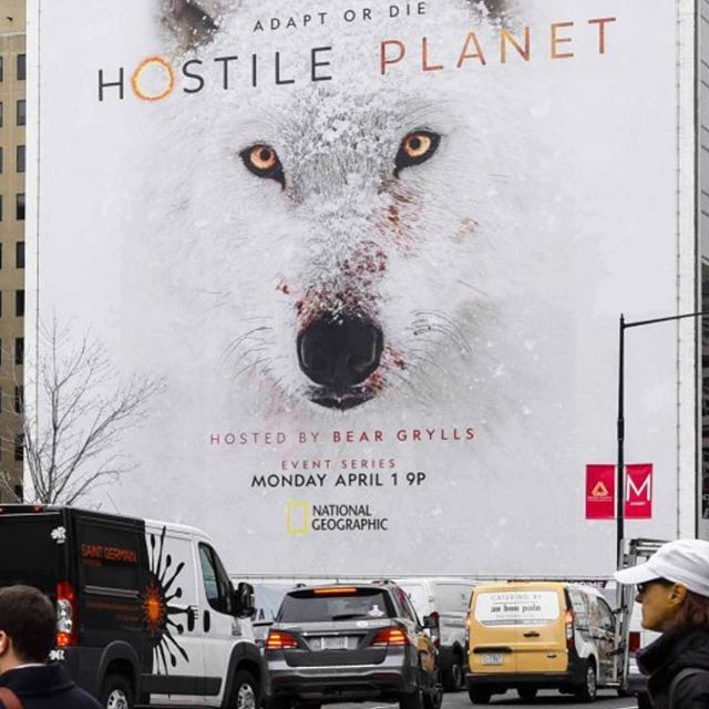 Always cool to see the first billboards going up across America and beyond... @NatGeoChannel #HostilePlanet coming soon! (If you thought Blue Planet was good... wait until you see Hostile Planet, and the extremes these animals go to for survival!) #inspi…  https://t.co/PMSTQXgMNK