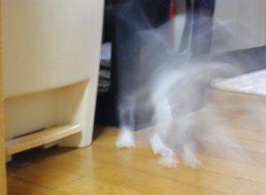 ゆう猫@夕花さんの投稿画像