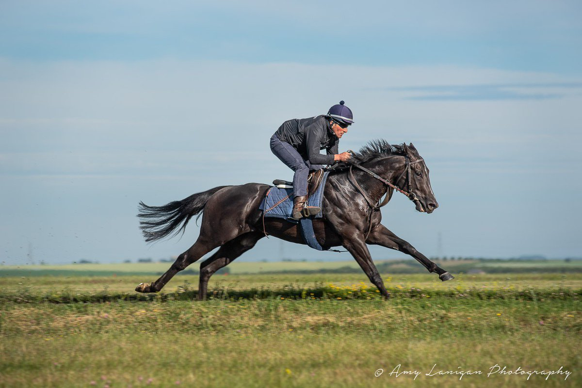 We have 4 runners today - AL ASEF (Ryan Moore) lines up in the 5.45, BRANDON (Ryan Moore) runs in the 6.15 & WILLKOMMEN (@SC_Cherchi) lines up in the 8.15 @ChelmsfordCRC. AMERICAN ENDEAVOUR (Marc Monaghan) runs in the 8.00 @WolvesRaces. Good luck to all connections!